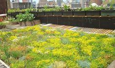 Toiture vegetalisee piscine sur toit et toit terrasse pinterest - Plante toiture vegetalisee ...