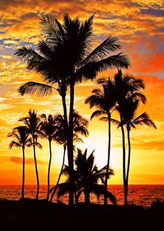 Palm tree sunset, North Shore, Oahu, Hawaii
