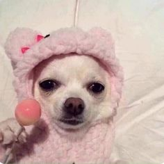 Why do you like dogs? Cute Animal Memes, Cute Memes, Cute Funny Animals, Cute Baby Animals, Funny Dogs, Cute Dogs, Funny Memes, Animal Pictures, Funny Pictures