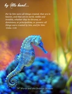 by His Hand...were all things created.   Scripture by the Sea  http://www.pinterest.com/faithfilledinfl/scripture-by-the-sealet-his-word-flow-over-me/