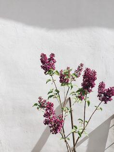 Shades Of Burgundy, Burgundy Color, Red Plum, Burgundy Dress, Dark Red, My Flower, Flower Power, Pretty Flowers, Wild Flowers