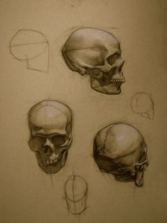 Colleen Barry Skull Study