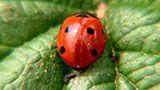 video o hmyzu