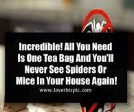 Incredible! All You Need Is One Tea Bag And You'll Never See Spiders Or Mice In Your House Again!