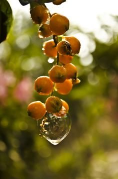 fresh fruits photos-Bubbly Fruits