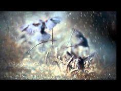 """First Rain"" by Marc Antoine."