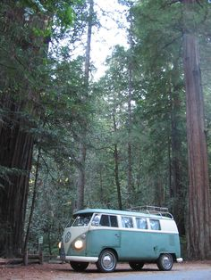 VW Bus in the redwoods