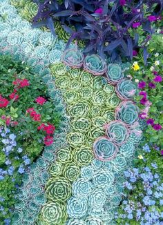 Create a mosaic made from succulents along side a pathway or for the planter under the a window.