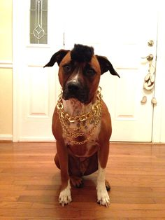 Mr. T dog Halloween costume - I think this should be Bo's costume :)