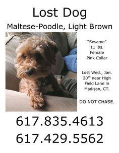 brown  Patty Bonviso‎CT Shoreline Lost Dog Network    Please share, this pup is missing in Madison...Call owner right away with any information. https://www.facebook.com/groups/352798238164966/permalink/839263729518412/