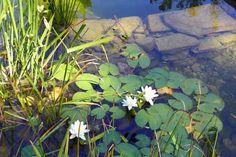 Schaugärten in Österreich - #tulln #gartentulln #niederösterreich #askEnrico Plants, Nature, Lawn And Garden, Plant, Planets