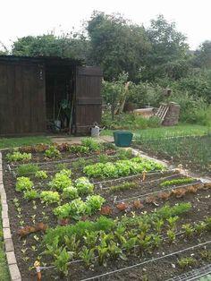 garden allotment design | Gardening ideas | Pinterest | Allotment ...