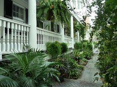 a curious gardener: southern courtyard gardens