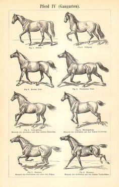 1897 Horse Gaits Original Antique Equestrian, $16.95