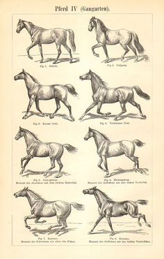 1897 Horse Gaits Original Antique Equestrian, $16.95