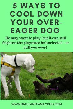 Does your dog want to play with every dog he sees? Find out 5 ways to change this, for happier walks all round | FREE EMAIL COURSE | Reactive dog, problem dog, fearful dog, dog behavior | #dogtraining, #reactivedog, #dogtraining, #growlydog | www.brilliantfamilydog.com