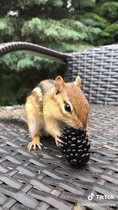 Cute Wild Animals, Super Cute Animals, Cute Little Animals, Cute Funny Animals, Animals Beautiful, Animals And Pets, Cute Squirrel, Baby Squirrel, Baby Chipmunk