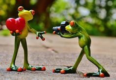 Free Image on Pixabay - Frogs, Love, Valentine'S Day, Pose Happy Valentines Day Images, Valentines Day Funny, Frog Pictures, Taking Pictures, Photomontage, Sapo Meme, Funny Frogs, Youre Cute, Green Frog
