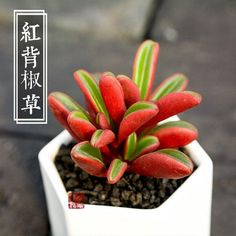 We provide colourful live succulents and pots at reasonable price.