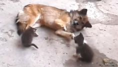 Mother Cat Brings Her Kittens To Meet An Unlikely Old Friend https://plus.google.com/+KevinGreenFixedOpsGenius/posts/8Fvizpufbjr