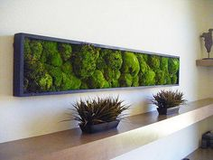 Biomimicry professional and plant designer Joe Zazzera talks about moss wall art as an affordable, maintenance-free way to bring outdoor beauty and calm into the workplace.