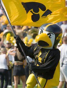 Iowa Hawkeyes Herky the Hawk mascot. Big Ten Football, Iowa Hawkeye Football, College Football Teams, Flag Football, Iowa Hawkeyes, Sports Advertising, Helmet Logo, Home Team, School Spirit