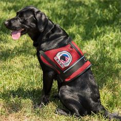 Esa Vests Images Dog Vest