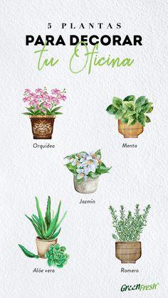 Cactus Decor, Plant Decor, Cactus Plants, Garden Plants, Garden Water Fountains, Jungle House, Plant Therapy, My Secret Garden, Green Garden