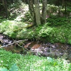 Random creek in the Monongahela National Forest in WV