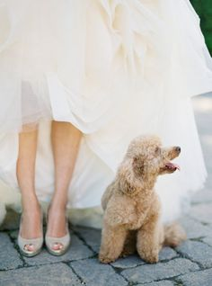 If only Daisy was well-mannered enough to join our wedding festivities... sigh