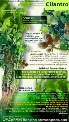 remedios naturales uretritis hojas de malvavis
