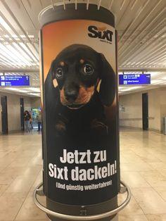 """""""Jetzt zu Sixt dackeln!"""" (Sujet 3)  Drei Sujets waren an je einer Plakatwand am Frankfurter Flughafen angebracht. Werbung von der Autovermietung Sixt ist einfach immer ein Hingucker! #poster #plakat #hund #dackel #werbung"""