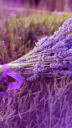 Обои wallpaper iPhone flowers lavender