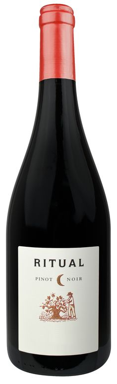 Floral aromas with blueberry and a hint of vanilla. Fresh tannins plus a silky, smoky layer. Drink or hold. Pinot Noir, Wines, Blueberry, Vanilla, Fresh, Drink, Bottle, Floral, Food