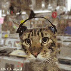 Bet he's listening to Pantera | Funny Pictures, Quotes, Pics, Photos, Images