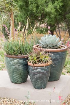 Find out how to water succulents in outdoor container arrangements