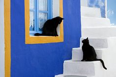 Cats in Greek islands.........THEY JUST PAINTED THIS WINDOW SILL AGAIN.....COME…