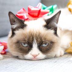 grumpy #cat