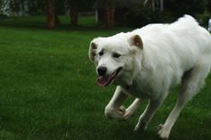 My Dog Turbo - The Begining