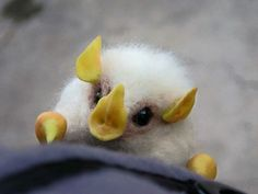 Cotton ball bats. They make their tents on banana leaves for themselves!