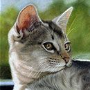 """Sunshine At the Windowsill"" Domestic Cat Colored Pencil 11"" X 14"" © Gemma Gylling"