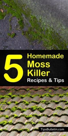 How To Get Rid Of Moss In Your Lawn Naturally Lawn Care
