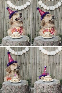 Bea Arthur's 3rd Birthday - Golden retriever, doggie birthday, puppy, golden girl