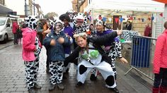 Some cow friends . Pictures by Jason Pictures Gravesend