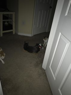 Guess he really wanted our key basket at 3 am.   cats funny pictures