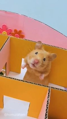 Funny Animal Jokes, Cute Funny Animals, Cute Cats, Hamsters Video, Funny Hamsters, Baby Animals Super Cute, Cute Little Animals, Cute Animal Videos, Cute Animal Pictures