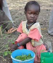 Due to severe food shortages in South Sudan most families are surviving on leaves from the 'Lalob' trees.  The leaves are not very nutritious and believed to cause diarrhoea in children - but they are all people have to eat.