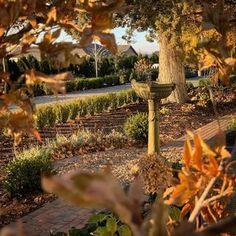 200 Laura Leboutillier Garden Answer Ideas In 2020 Garden Plants Instagram