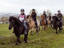Icelandic horse Icelandic Horse, Faroe Islands, Fire And Ice, Hot Springs, Troll, Denmark, Mythology, Norway, Vikings