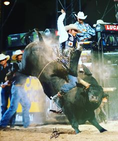 Fun bull i rode in Vegas back in May at the #lastcowboystanding event. #wildnout…